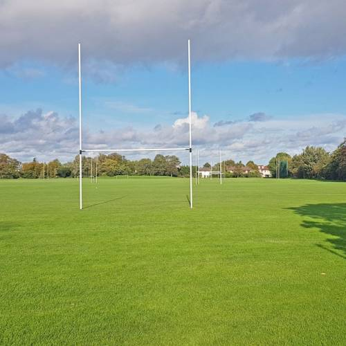 Terenure College Rugby